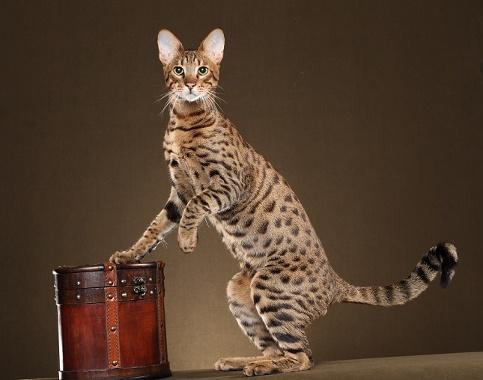 Best Cat Videos Kitten